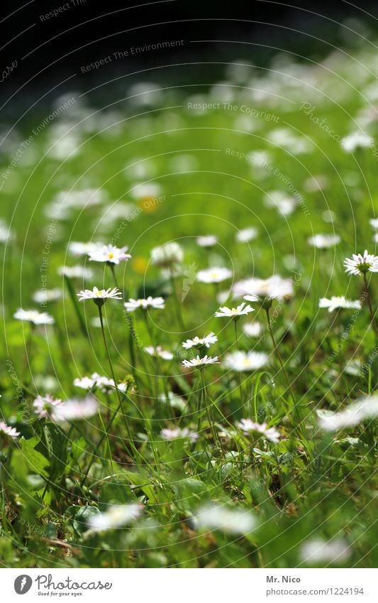 Nature Plant Green Summer White Flower Landscape Environment Spring Meadow Grass Happy Garden Park Contentment Growth