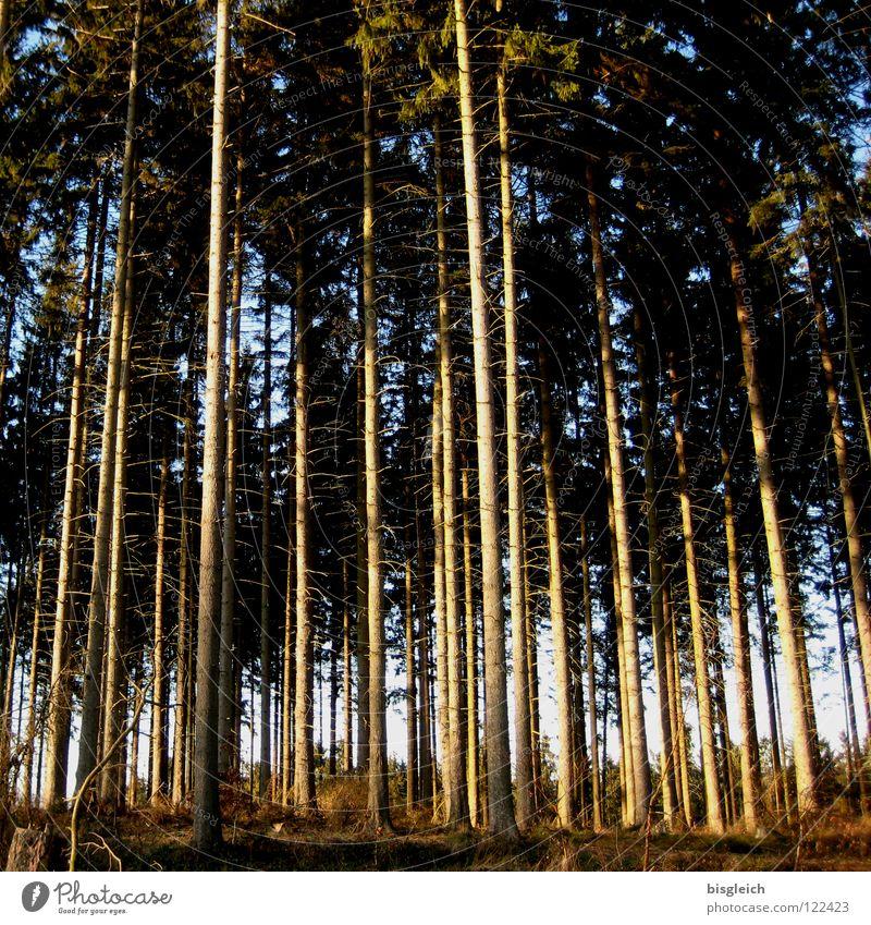 Nature Tree Green Plant Forest Brown Success Arrangement Career