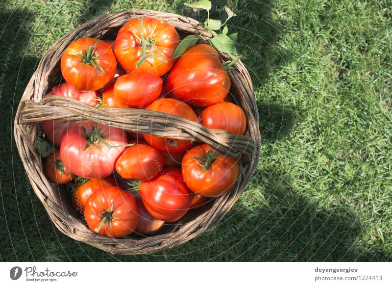 Tomatoes in wooden basket on green meadow. Vegetable Fruit Eating Vegetarian diet Diet Summer Sun Garden Cook Group Nature Plant Leaf Fresh Large Natural Juicy