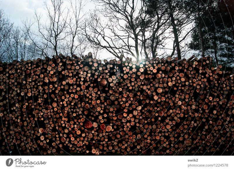cutting quantity Environment Nature Sky Clouds Beautiful weather Tree Wild plant Tree trunk Stack Logging Forest Gigantic Large Tall Round Many mass