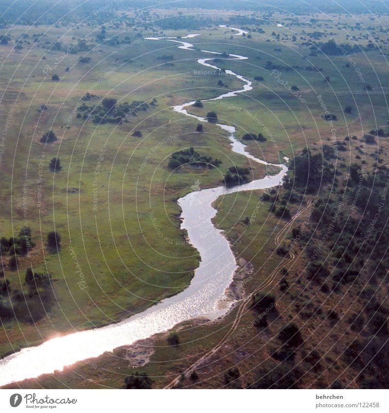 lifeline Bird's-eye view Vacation & Travel Far-off places Freedom Safari Aviation Nature Landscape Water Warmth Tree River bank Brook Okavango Botswana Africa