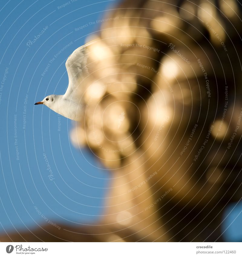 Sky Blue Freedom Head Hair and hairstyles Bird Gold Flying Wing Feather Seagull Beak Beat Schärding
