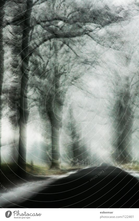 Avenue in winter Winter Brandenburg Hoar frost Black Blur Art Tree Cold White December Ice Frozen Delicate Branchage January Winter's day Transport Traffic lane
