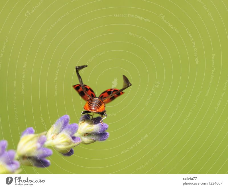 3...2...1... Trip Plant Animal Spring Summer Flower Blossom Wild animal Beetle Wing Ladybird Insect Fragrance Flying Free Small Above Athletic Blue Green Brave
