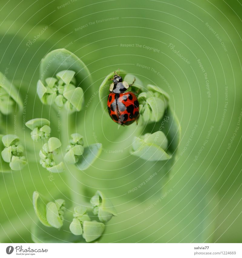 View from above Healthy Well-being Senses Calm Nature Plant Animal Spring Summer Leaf Foliage plant Garden Wild animal Beetle 1 Discover Relaxation To enjoy