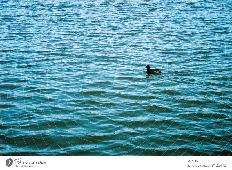 Nature Water Sun Blue Summer Black Loneliness Animal Life Sadness Lake Bird Waves Germany Swimming Munich