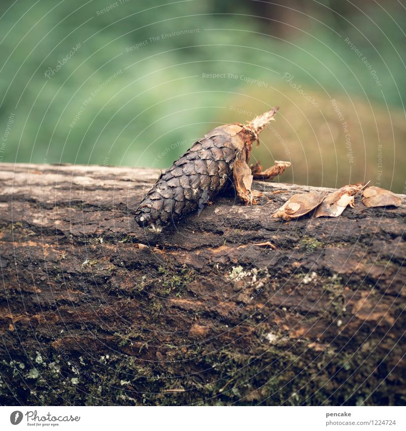 the pangolin Nature Summer Forest 1 Animal Observe Sit Joy Cone Tree bark Tree trunk Blur Erratic Scales Crouching Colour photo Exterior shot Close-up Pattern