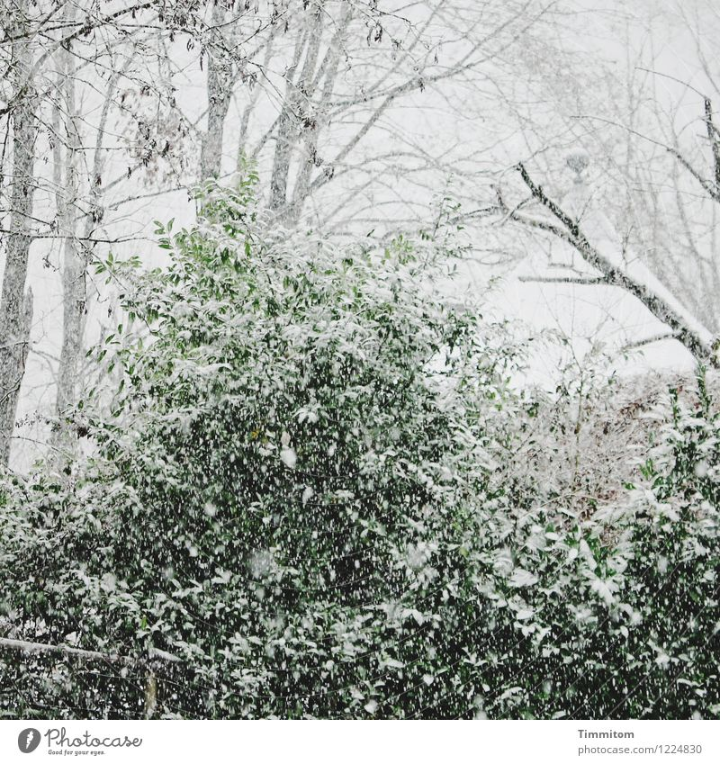 Nature Plant Green White Winter Cold Environment Emotions Natural Snow Gray Garden Park Snowfall Climate Pavilion