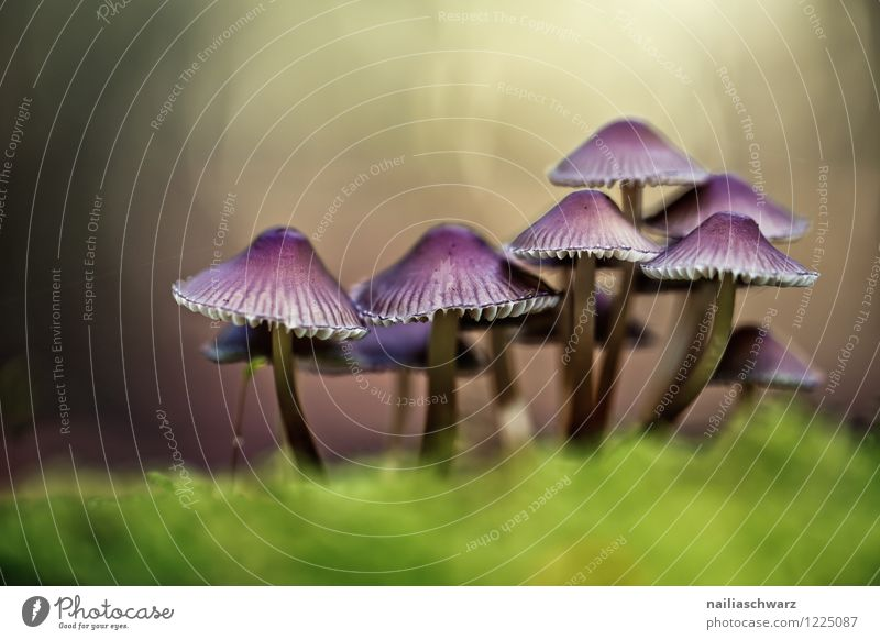 Nature Plant Green Beautiful Leaf Forest Environment Yellow Natural Growth Fresh Simple Violet Attachment Moss Mushroom