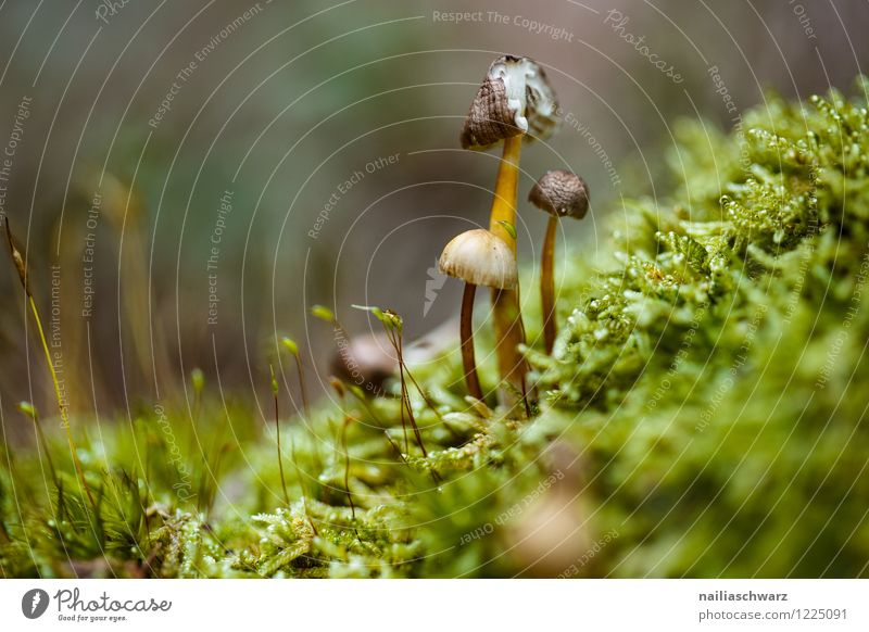 Mushrooms in the autumn forest Environment Nature Tree Moss Leaf Forest Growth Simple Natural Green Peaceful Pure forest mushroom Ground Autumnal Automn wood