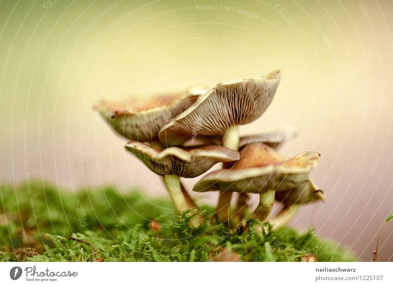 Mushrooms in the autumn forest Nature Plant Autumn Moss Leaf Forest Growth Simple Happiness Fresh Delicious Natural Positive Multicoloured Green Purity