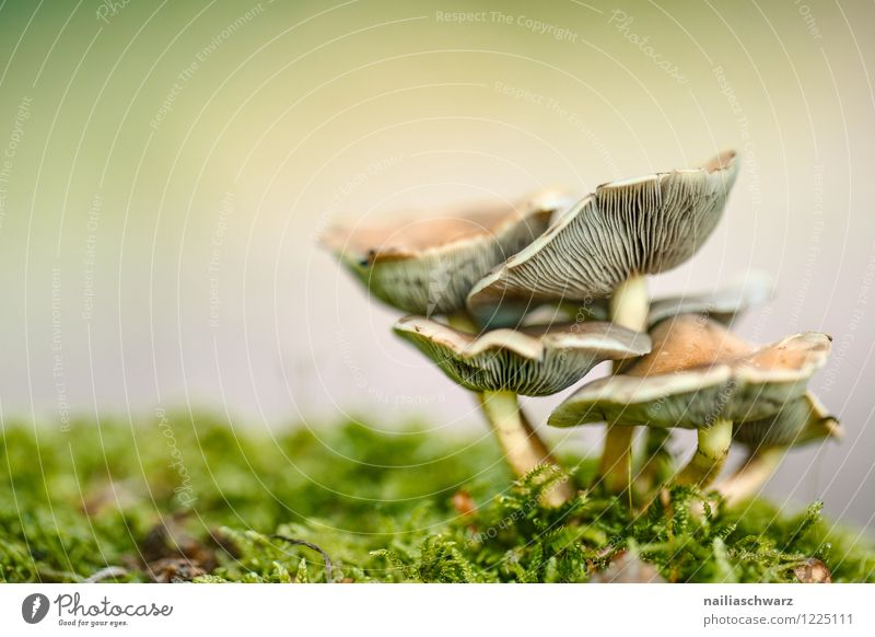Mushrooms in the autumn forest Environment Nature Tree Moss Leaf Forest Growth Delicious Natural Beautiful Brown Yellow Green Peaceful forest mushroom Ground