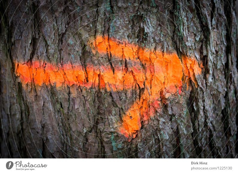 Nature Plant Colour Tree Forest Environment Dye Exceptional Brown Orange Signs and labeling Characters Signage Uniqueness Sign Tree trunk