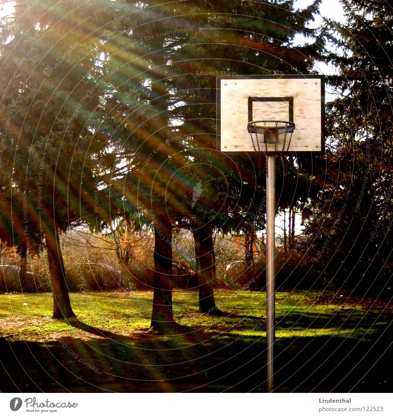 Bermuda Ball Basketball basket Fir tree Tree 3 Triangle Sun Playing Light Sports Light (Natural Phenomenon) Lighting sunshine triple three play fun game match