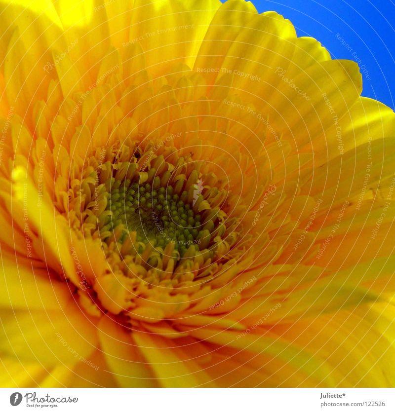 Beautiful Sky Flower Blue Summer Yellow Blossom Open Splendid