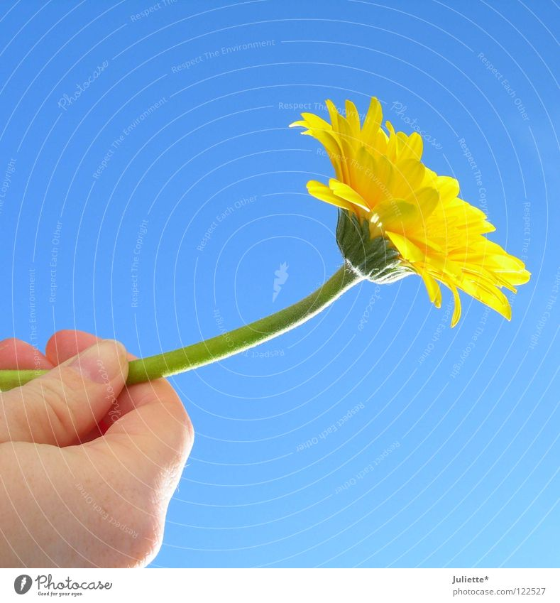 For DICH II Flower Yellow Style Hand Air Green Summer Birthday Sky To hold on Beautiful toward heaven Blossoming