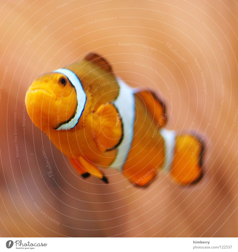 Water Plant Fish Dive Zoo Virgin forest Cuba Exotic Aquarium Coral Bahamas Clown fish