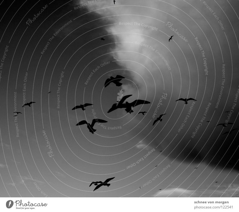 Skywards Bird Lake Seagull Clouds Black White Animal Winter Flying Weather Life