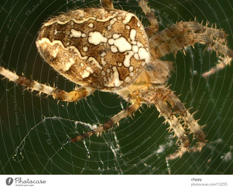 spider Spider Cross spider Transport Macro (Extreme close-up) Net