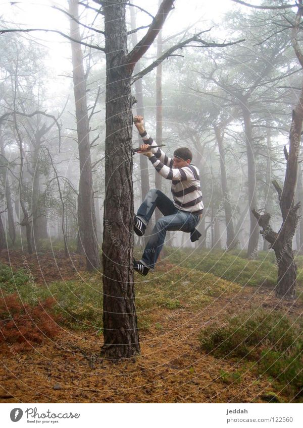 adventurous ;) Forest Fog Hang Wilderness Striped Tree Autumn To hold on Strong Adventure Joy Youth (Young adults) Guy Dynamics impress Nature Climbing Athletic