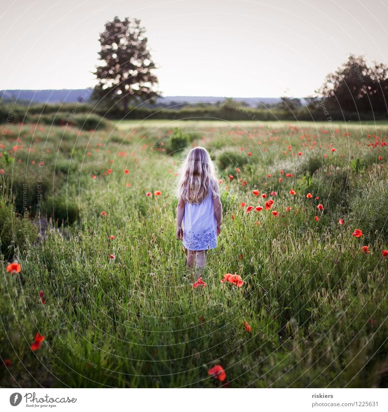 In the poppy field Human being Feminine Child Girl Infancy 1 3 - 8 years Environment Nature Plant Spring Summer Beautiful weather Flower Poppy field Field