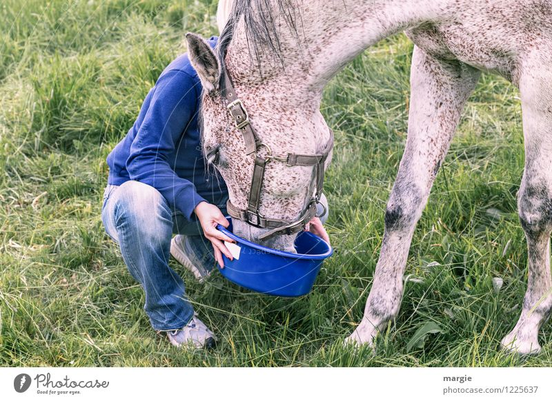 Human being Woman Youth (Young adults) Blue Green Young woman Animal Adults Love Meadow Grass Feminine Contentment Horse Delicious Pelt