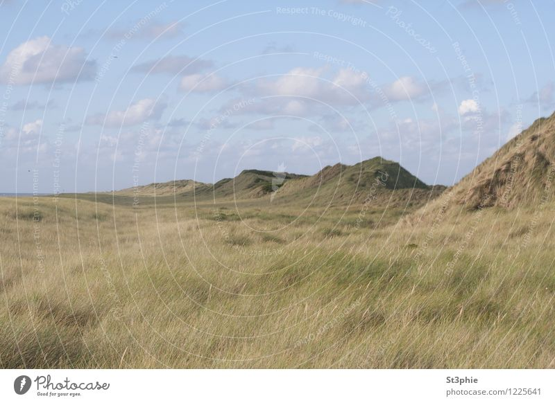 infinitely Relaxation Calm Beach Ocean Island Nature Landscape Plant Sand Sky Clouds Sunlight Summer Beautiful weather Grass Foliage plant Meadow Hill Coast