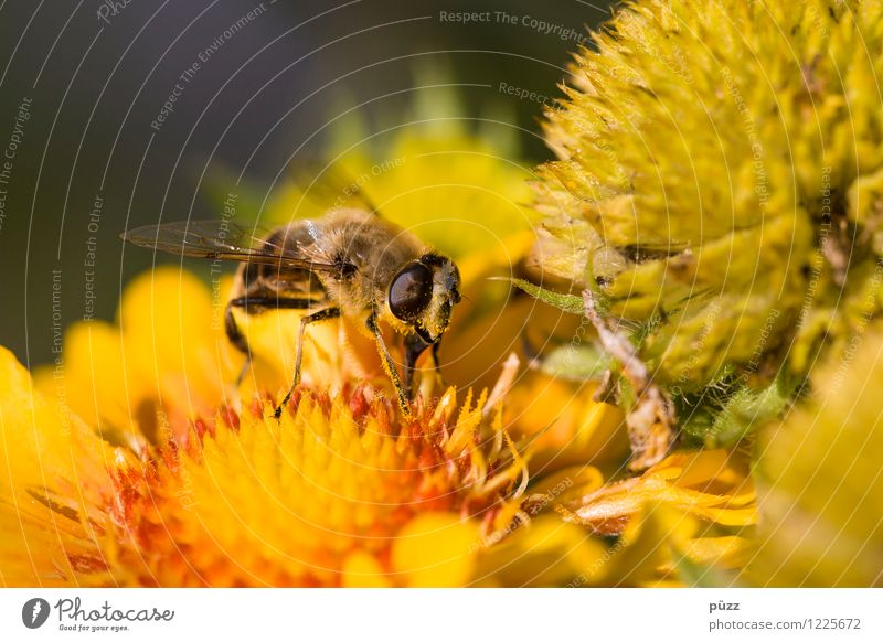 Nature Plant Summer Flower Animal Environment Yellow Spring Blossom Meadow Garden Wild animal Beautiful weather Insect Bee Pollen