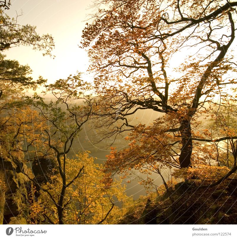 autumn Autumn Tree Leaf Bastei Brown Moody Seasons Red Yellow Vacation & Travel Relaxation Elbe caspar david friedrich Elbe valley Gold Nature Kitsch Trip