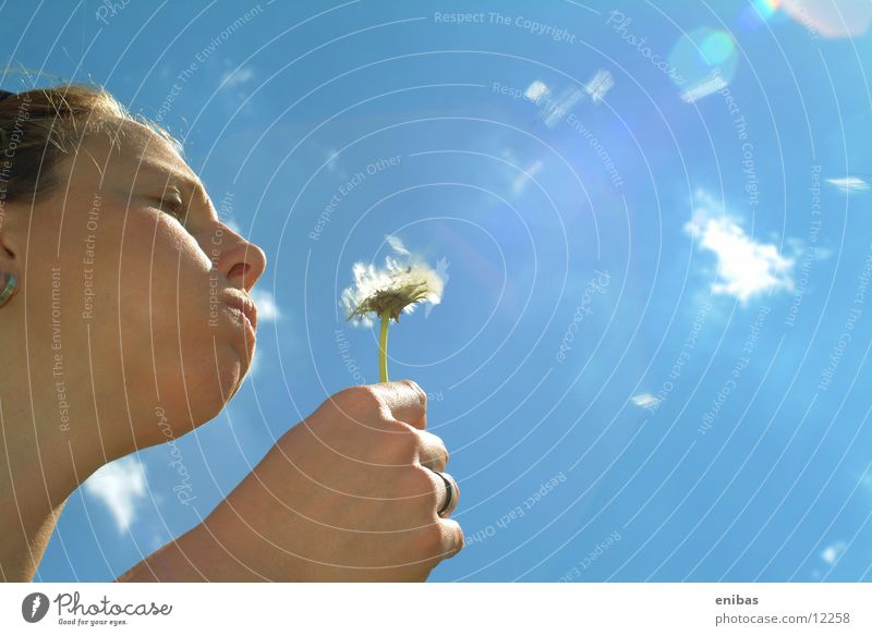 dandelion Flower Sunbeam Woman Back-light Sky Bird's-eye view filled cheeks Perspective
