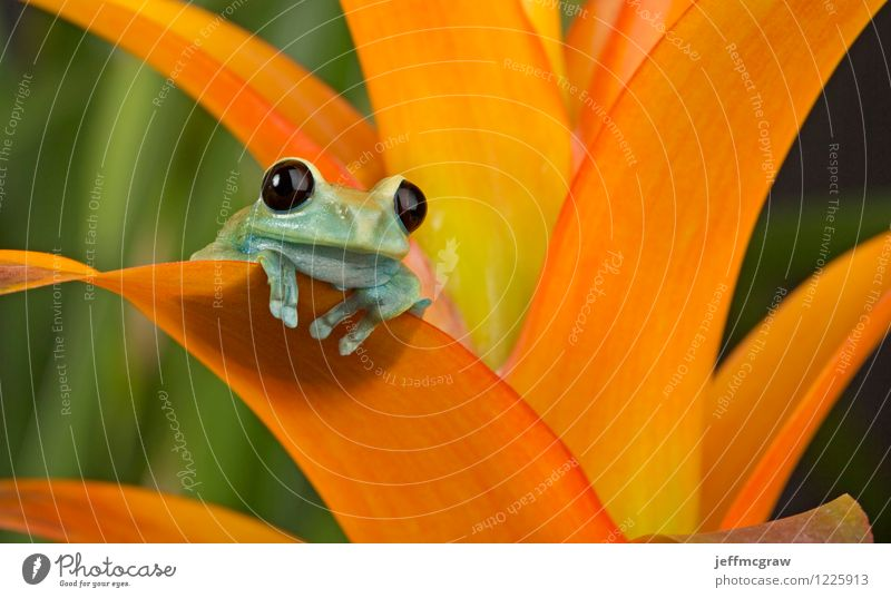 Treefrog Enjoying the View Environment Nature Plant Animal Foliage plant Exotic Pet Frog Animal face 1 Looking Sit Bright Beautiful Uniqueness Small Cute Yellow