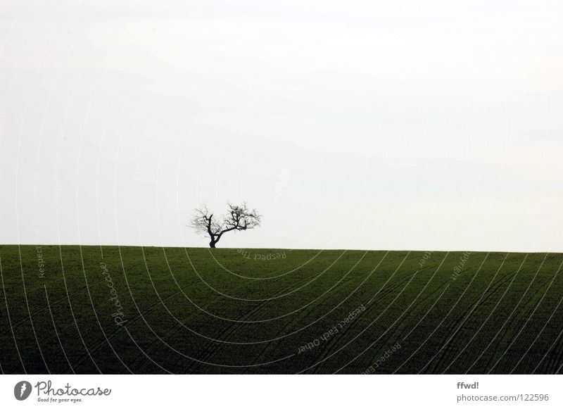 solitude Tree Twigs and branches Branchage Loneliness Sparse Simple Simplistic Reduced Minimal Gloomy Silhouette Field Stripe Line Tracks Lanes & trails Plowed