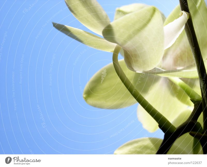 Nature Sky Green Blue Plant Joy Life Spring Growth Positive Shoot Occur Maturing time Bright green