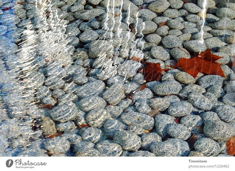 Footbath would be possible. Water Leaf Pebble Stone Esthetic Fresh Healthy Bright Brown Gray White Emotions Reflection Life Autumn leaves Cold Refreshment