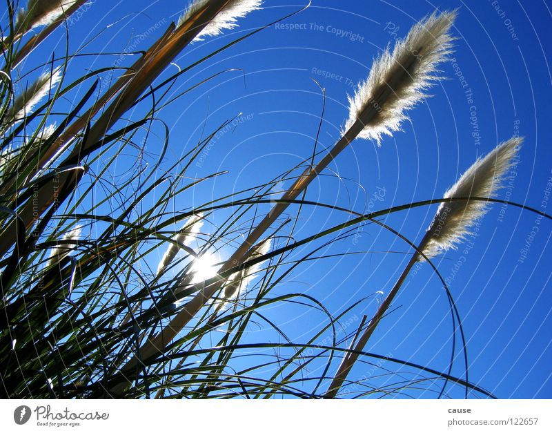 Sky Sun Green Blue Meadow Grass Spring Wind Blade of grass Straw