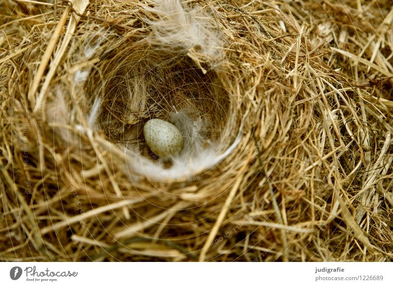 Iceland Nature Animal Spring Manmade structures Nesting place Bird's egg Wagtail Feather Baby animal Small Natural Warmth Wild Soft Trust Safety Protection