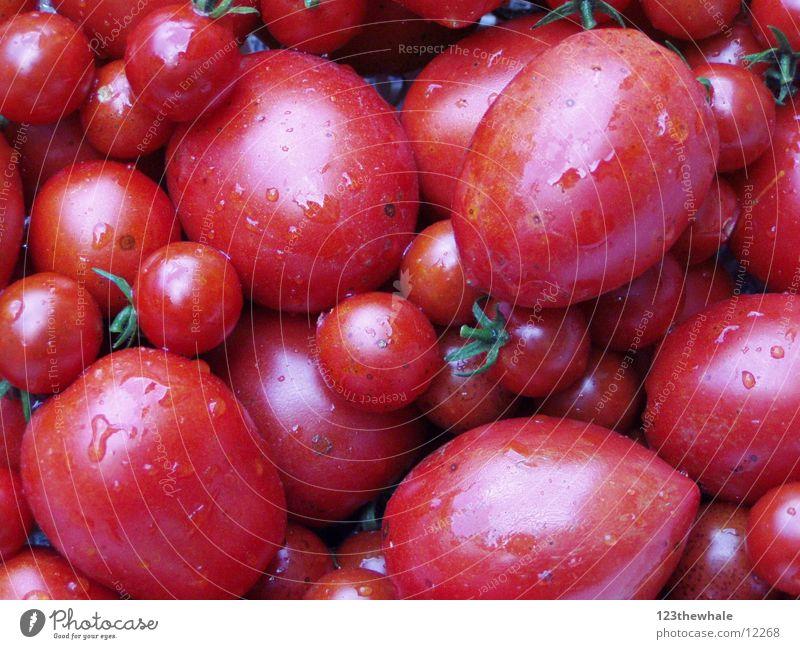 freshly picked Fresh Red Tomato