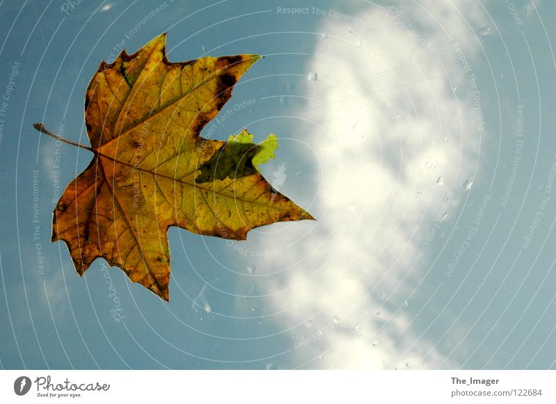 Nature Water Sky Leaf Clouds Cold Autumn Rain Weather Drops of water Seasons Canada Storm Maple tree