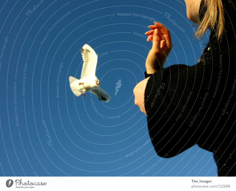 seagull flight Seagull Beak Feed Feeding Bird Coast Ocean Beach Hand Fingers Vacation & Travel Woman Feminine Joy Wing Baltic Sea Relaxation
