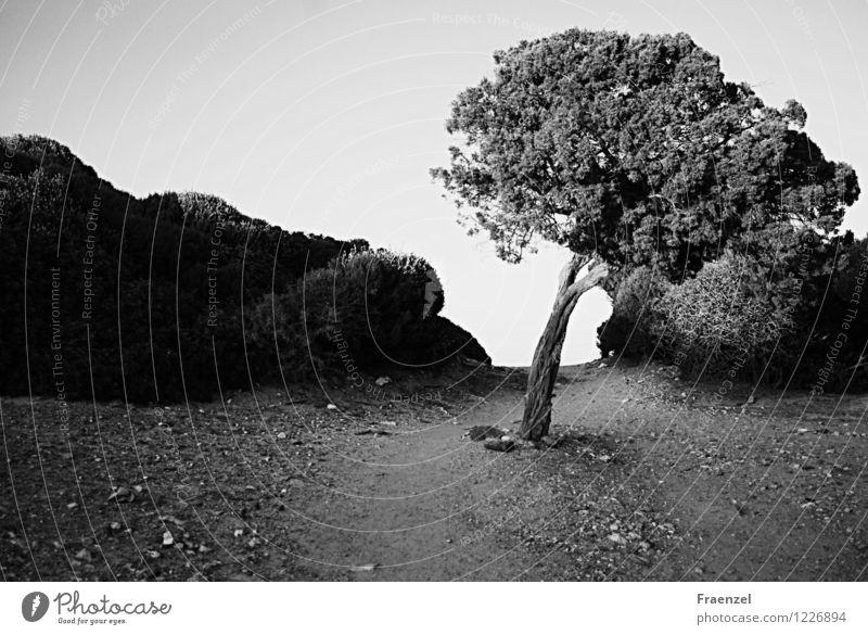 Sky Nature Plant Summer Tree Landscape Calm Environment Lanes & trails Sand Earth Bushes Hill Serene Wanderlust