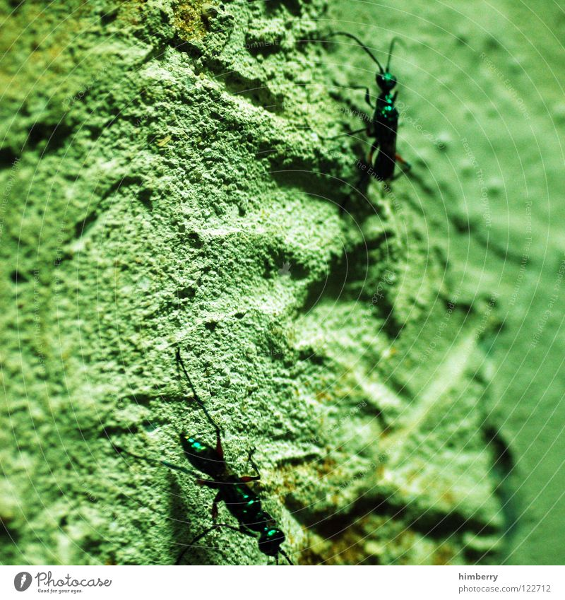 upsidedown Animal Zoo Ant Ant-hill Insect Wall (building) Pests Plagues crawl Climbing Walking