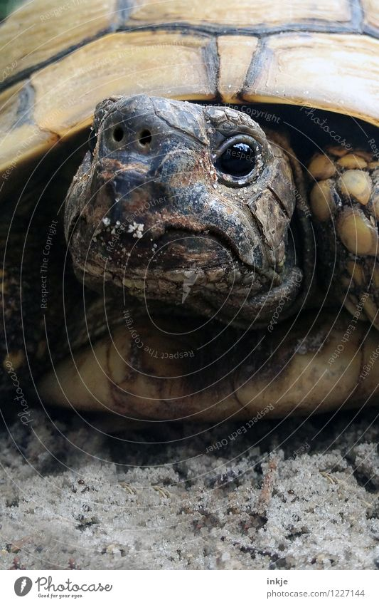 Old Animal Exceptional Wild animal Authentic Cute Near Pet Animal face Turtle Tortoise Endangered species