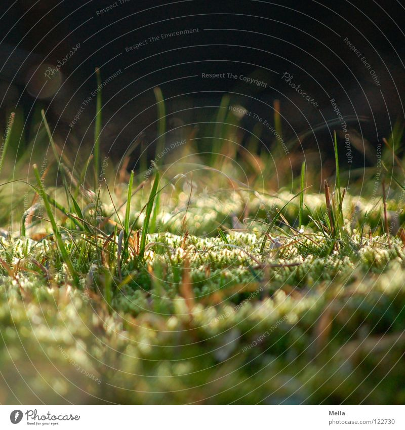 Green Meadow Grass Park Lighting Small Closed Perspective Near Soft Under Deep Beautiful weather Fairy tale Beetle Magic