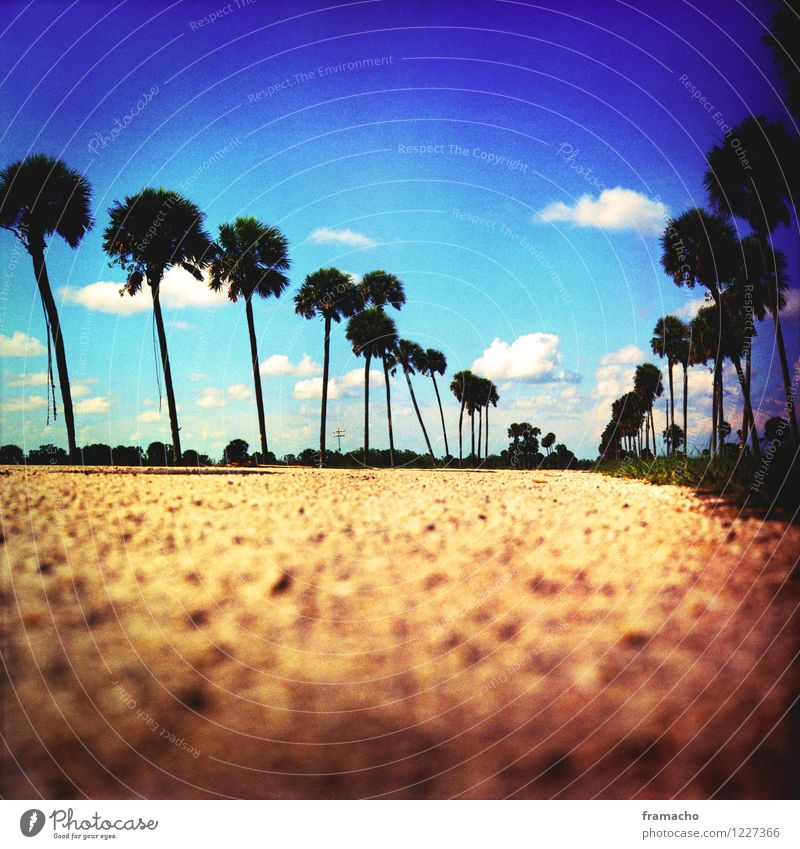 palmroad Vacation & Travel Tourism Freedom Summer Summer vacation Palm tree Environment Landscape Plant Earth Sky Clouds Beautiful weather Warmth Park Sand