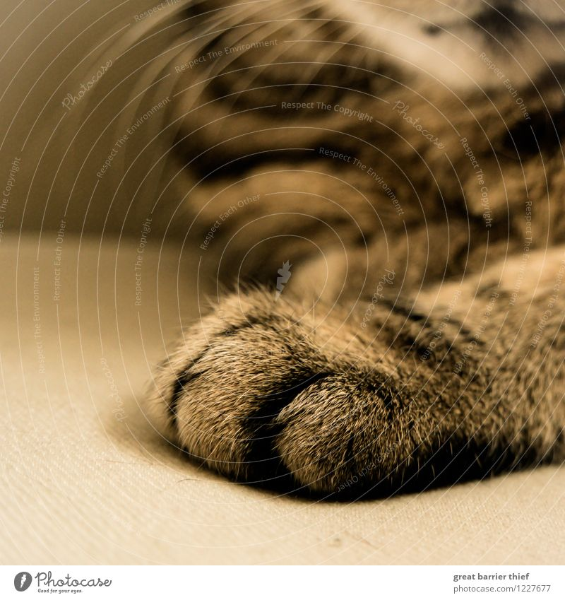 cat's paw Animal Pet Cat Pelt Paw 1 Relaxation Sleep Wait Brown Multicoloured Yellow Gold Colour photo Interior shot Close-up Detail Deserted Copy Space bottom