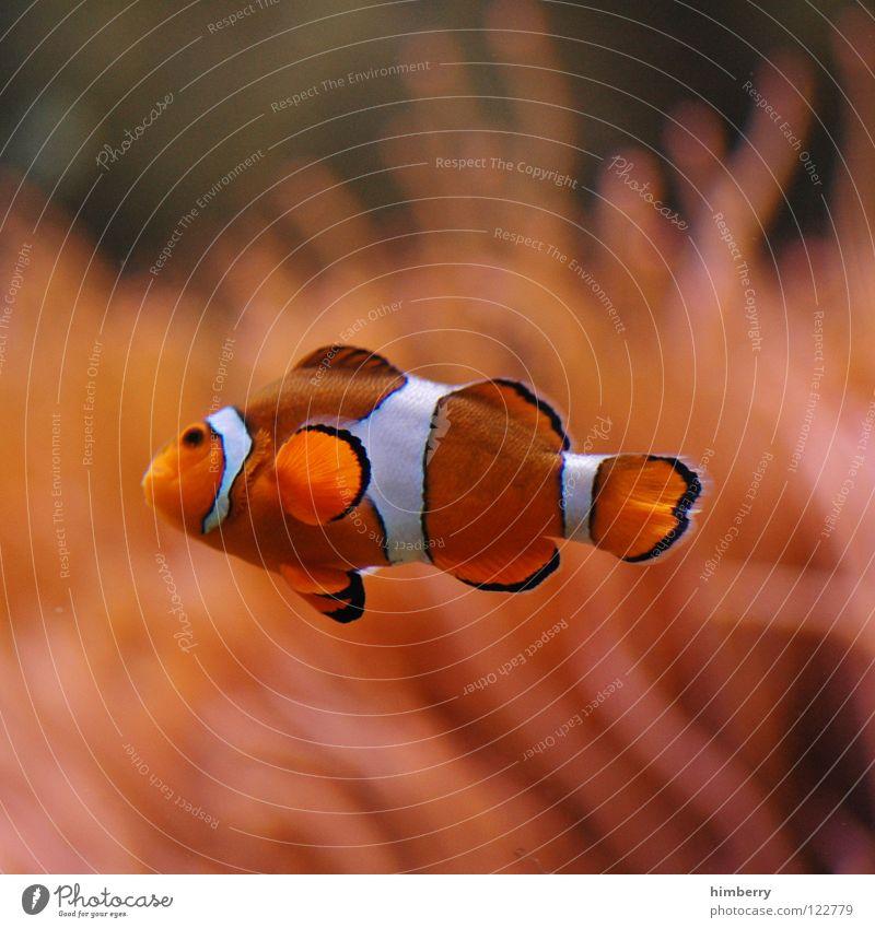 Water Plant Ocean Fish Dive Zoo Virgin forest Cuba Exotic Aquarium Coral Animal Bahamas Clown fish Finding Nemo