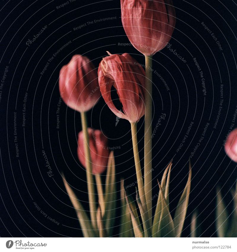 Plant Beautiful Colour White Flower Red Black Cold Yellow Emotions Spring Grass Pink 2 Orange Esthetic