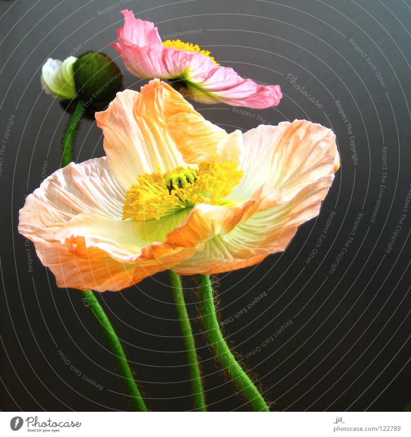 Beautiful White Flower Green Black Yellow Movement Gray Dance Orange Pink 3 Closed Multiple Round