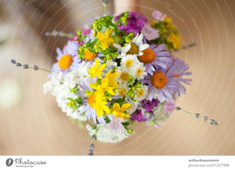 Bouquet of garden flowers Style Fragrance Summer Nature Spring Plant Flower Blossom Wood Authentic Simple Natural Beautiful Yellow Green Violet Orange Pink