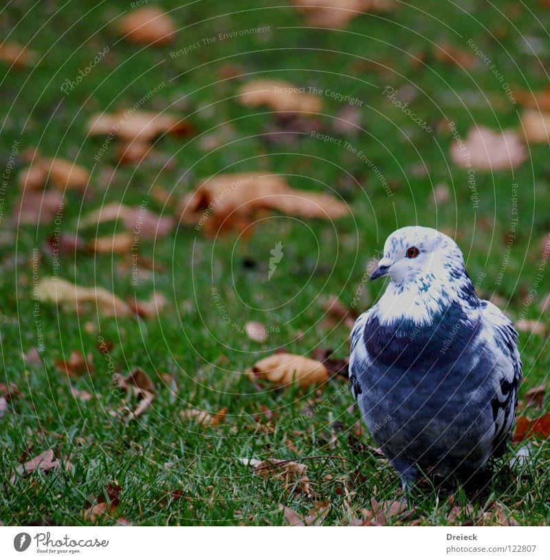 Groom Pigeon Bird Plumed Beak Green White Animal Meadow Grass Waddle Air Leaf Blade of grass Feeding Grain Park Sky Wing Feather Beautiful weather Blue Nature